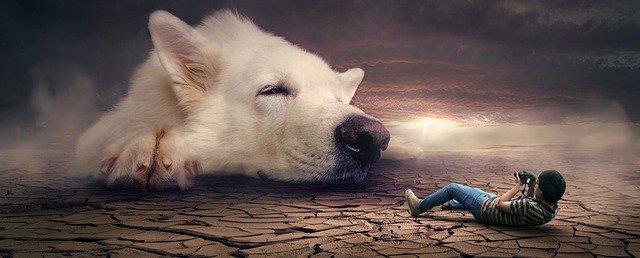 Köpek Saldırısı Sonucu Tazminat