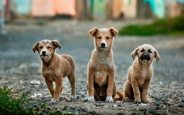 Köpekleri Zehirleyen Kişiler İçin Mahkeme Emsal Bir Karara İmza Attı